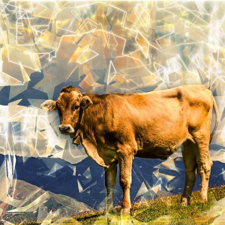 Facebook e la mucca sul prato