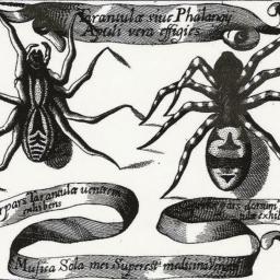 Il ragno e la danza: storia e tecnica della taranta